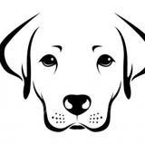 Indienne, Chien beagle à adopter