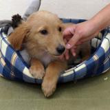Mistral, Chiot berger à adopter