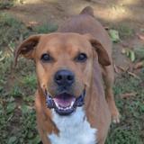 Marley, Chien berger à adopter