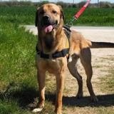 Nappo, Chien berger à adopter