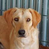 Rami ( réservé ), Chiot berger à adopter