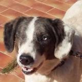 Ojo 1an, Chien border croisé beagle à adopter