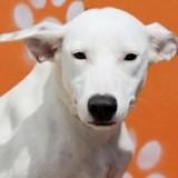 Nala, Chiot croisé / autre (berger) à adopter