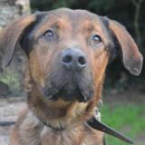 Bowser chao8414, Chien croisé / autre (berger) à adopter