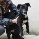 Nalla (ex bonnie), Chiot croisé / autre (border collie) à adopter
