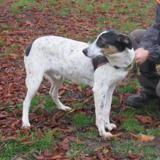 Omelo, Chien croisé / autre (chien courant) à adopter