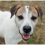 Rex, Chien croisé / autre (chien courant) à adopter