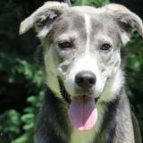 Sooky, Chien croisé / autre (husky siberien) à adopter