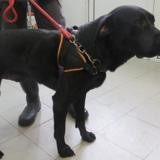 Mougli, Chien croisé / autre (labrador (retriever)) à adopter