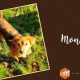 Mona (réservée), Chien croisé / autre (ratier) à adopter