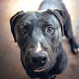 Bruce, Chien croisé / autre (terrier) à adopter