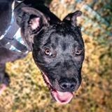 Mochi, Chiot croisé / autre (terrier) à adopter