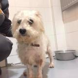 Black, Chien croisé / autre (yorkshire terrier) à adopter