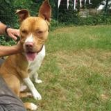 Turbo caa9286, Chien dogue argentin à adopter