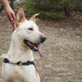Mojito, Chien dogue argentin à adopter