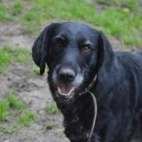 Magnum chao11189, Chien drahthaar à adopter