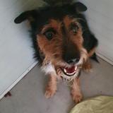 Lucky , Chien jadg terrier à adopter