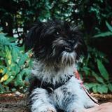 Arietty vaa21985, Chiot ratier à adopter