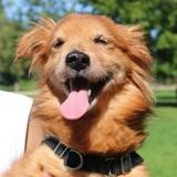 Tito, Chien ratier à adopter