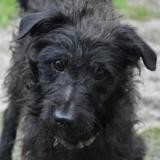 Jaimy chao10915, Chiot ratier à adopter