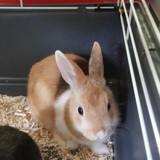 Nuf-nuf pac648, Animal lapin à adopter