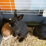 Nif-nif pac649, Animal lapin à adopter
