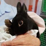 Break pac705, Animal lapin à adopter