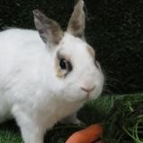 Passoa, Animal lapin à adopter