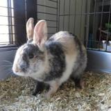Tagada, Animal lapin à adopter