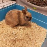 Bunny, Animal lapin à adopter