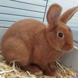 Kisscool (réservée), Animal lapin à adopter