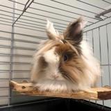Tikky, Animal lapin à adopter