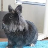 Dobby, Animal lapin à adopter