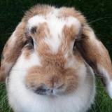 Lebb, Animal lapin à adopter