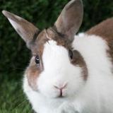 Pamuk dit coton, Animal lapin à adopter