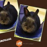 Pimousse, Animal lapin à adopter