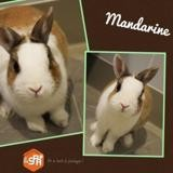 Mandarine, Animal lapin à adopter
