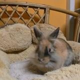 Litchi ad687, Animal lapin à adopter