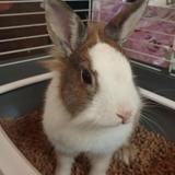 Valentine, Animal lapin à adopter