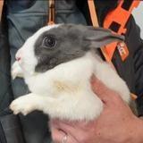 Nuage, Animal lapin à adopter