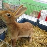 Icy, Animal lapin à adopter