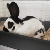 Heol qnac, Animal lapin à adopter