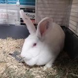 Mozzarella, Animal lapin à adopter