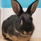 Princesse cac637, Animal lapin à adopter