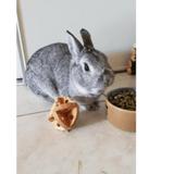 Romeo, Animal lapin à adopter