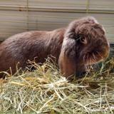 Eustache, Animal lapin à adopter