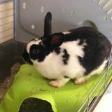 Bounty, Animal lapin à adopter
