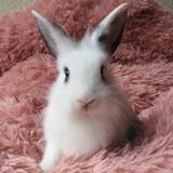 Abricot, Animal lapin à adopter