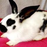 Gusgus, Animal lapin à adopter