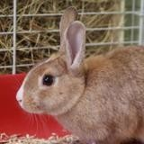 Quenotte, Animal lapin à adopter